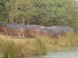 Hippo & Croc Boat Cruises with Advantage Tours